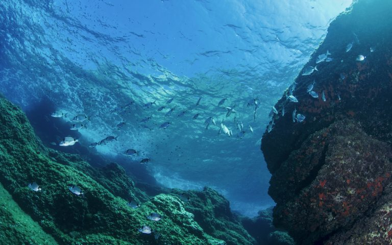 Blu Alghero | Immersioni subacquee Hotel Corte Rosada